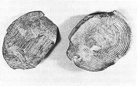 Bild Nr. 5 Mittelalter Holzschale u. Löffel Replik