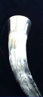 Trinkhorn mit breitem Mundrand